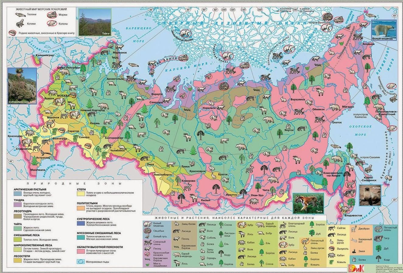 Растительные зоны России