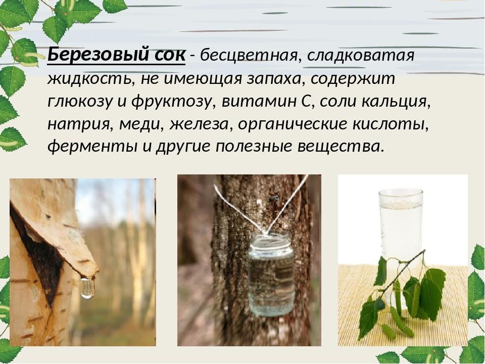 Эксперимент с березовым соком