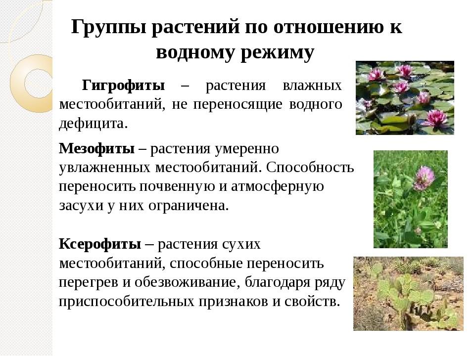 Экологические свойства и индивидуальность растений